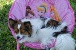 Dog resting in a Disney chair
