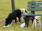 Dogs at a water bowl